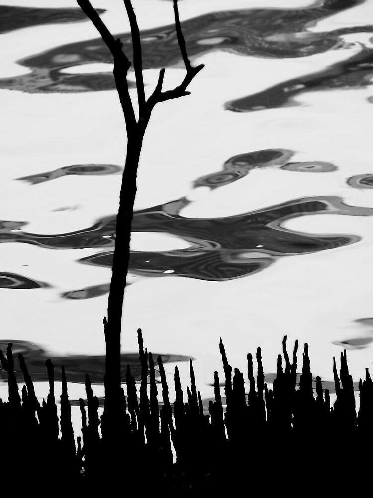 Mangrove Magic by Elizabeth McPhee
