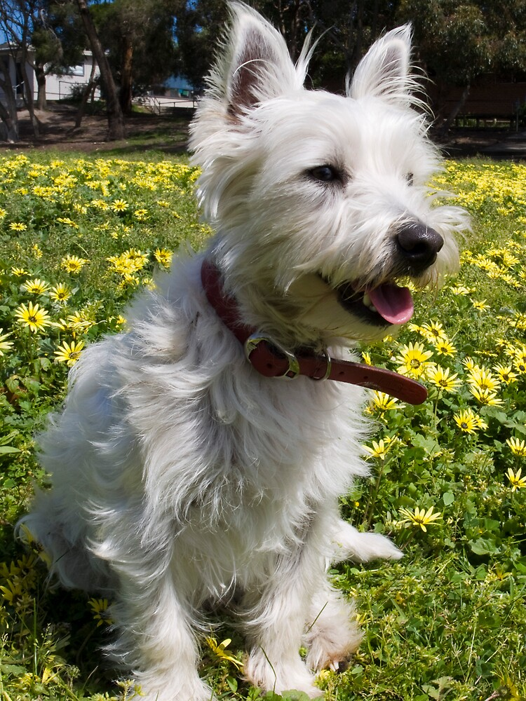 Bella loves Spring by Pascal and Isabella Inard