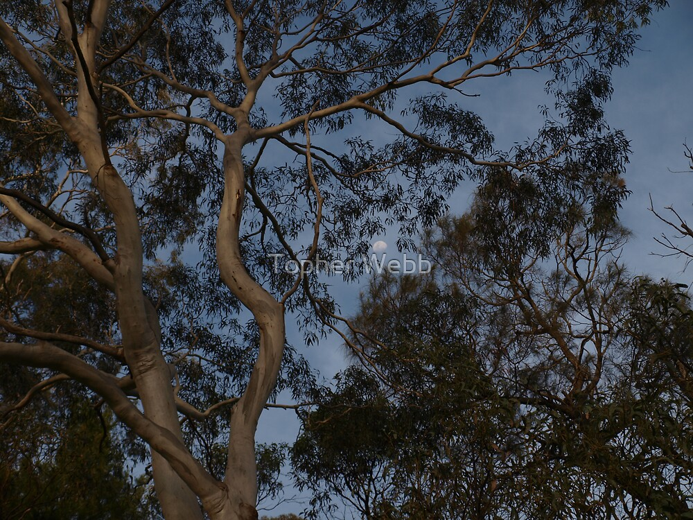 Moon through Trees by Topher Webb