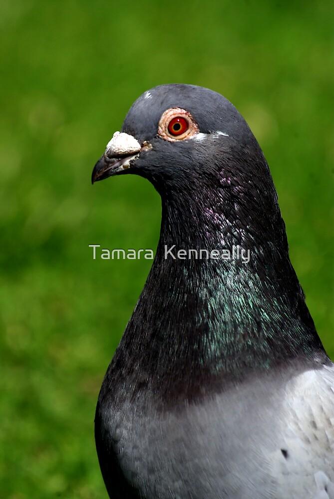 Rock Dove by Tamara  Kenneally