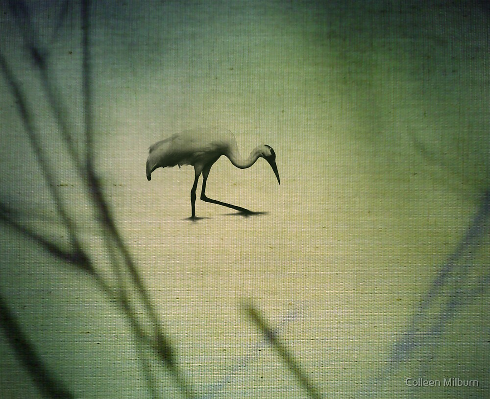The wader by Colleen Milburn