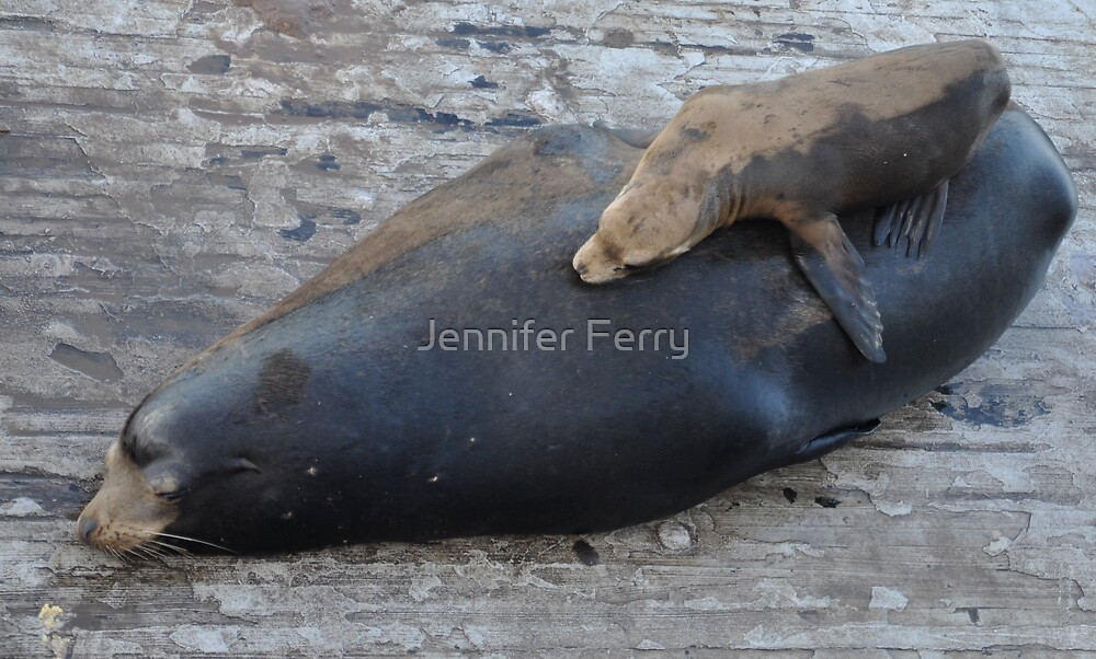 Resting by Jennifer Ferry