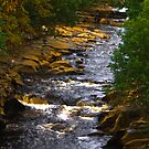 River Swale at Keld by Trevor Kersley