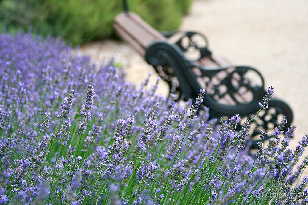Lavender Bench by Kelvin  Wong