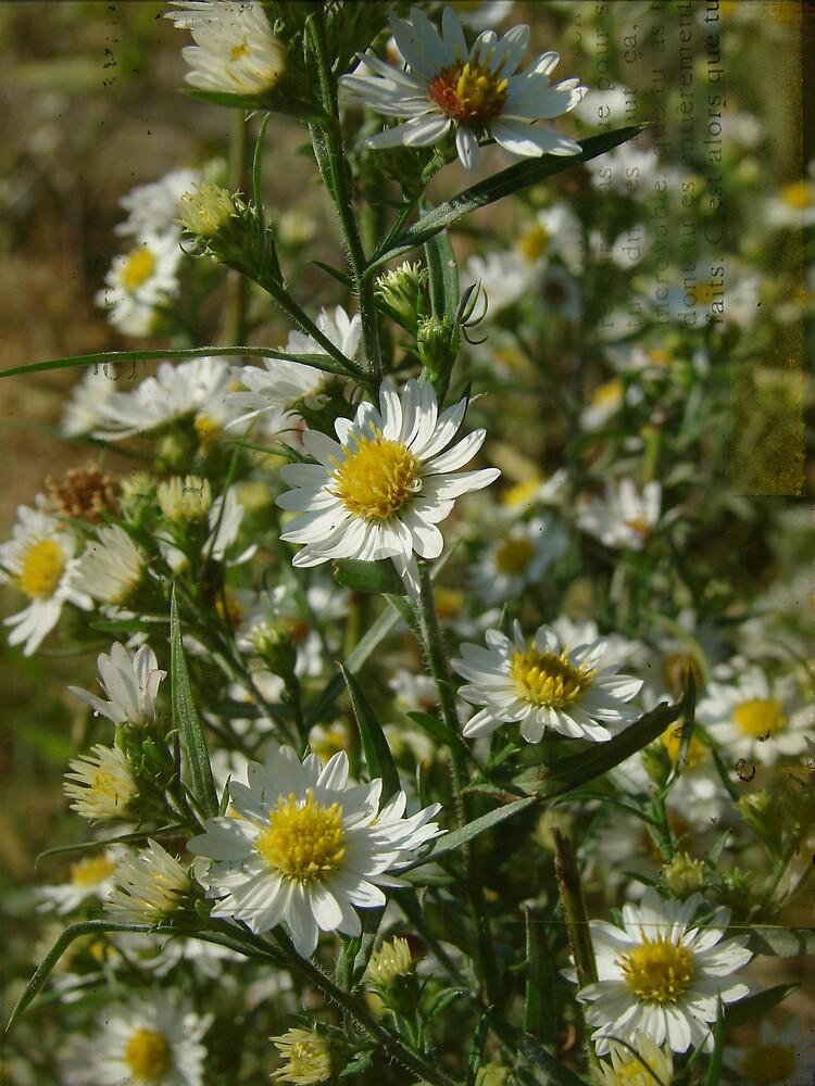 Weeds of Autumn by angelandspot