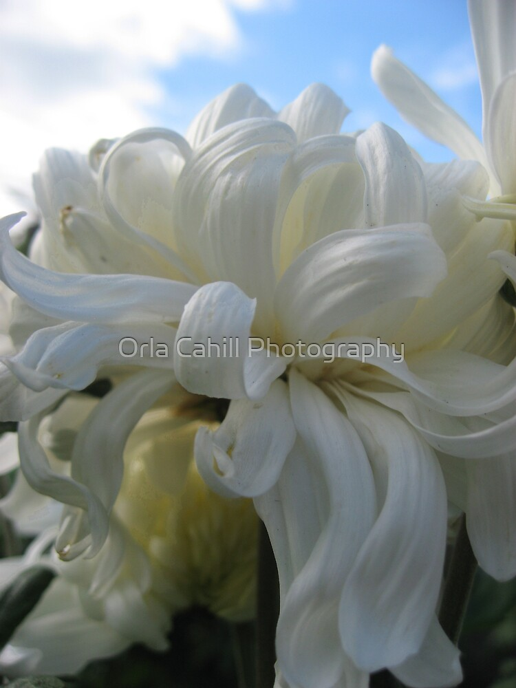 Angelic by Orla Cahill Photography