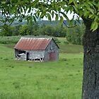 Old Long Reach Barn by Martha Medford