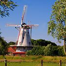 The grain stalk by Adri  Padmos