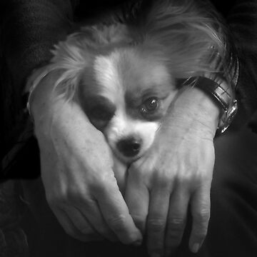Portrait of Gigi by rozmcq