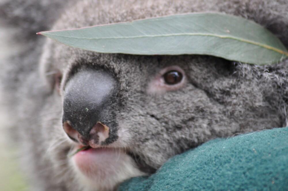 koala by Princessbren2006