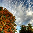 Maples in the Clouds by Wayne King