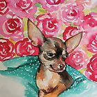 lola chihuahua by sylvie  demers