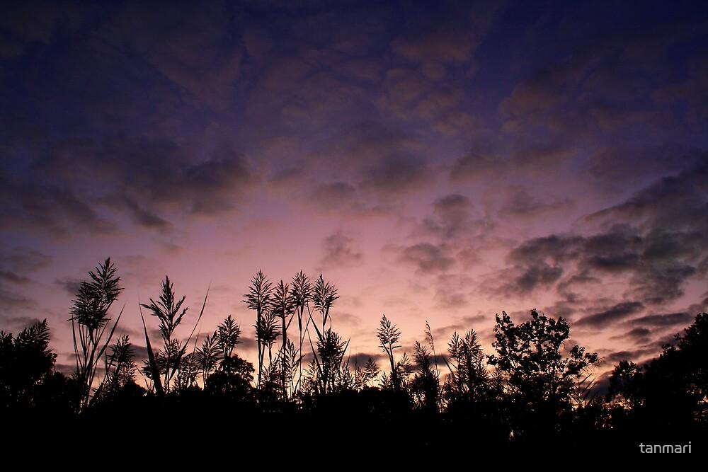 Reeds at dusk by tanmari