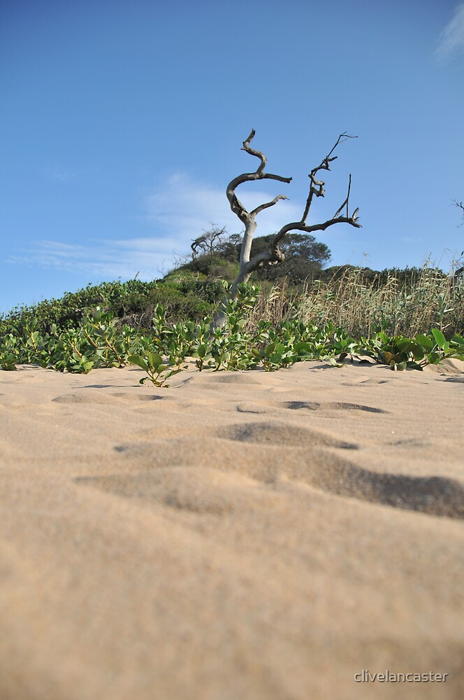 Beach Under Growth by clivelancaster