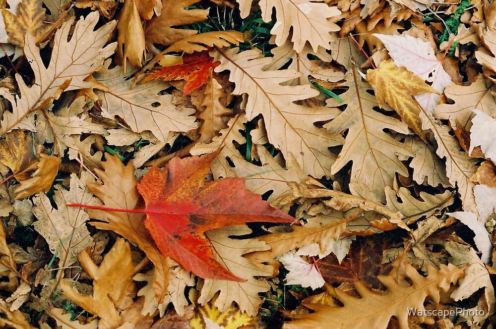Oak and Maple Autumn by WatscapePhoto