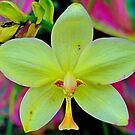 Waikiki Floral Study 6  by Robert Meyers-Lussier