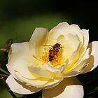 Bee Happy by LozzaElizabeth