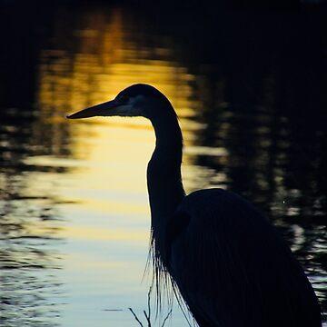 Heron Silhouette  by BlueNorth
