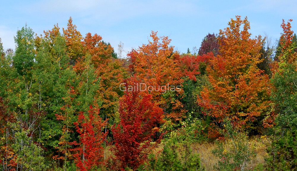Colours of  Fall by GailDouglas