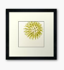 Yellow Dandelion Framed Print