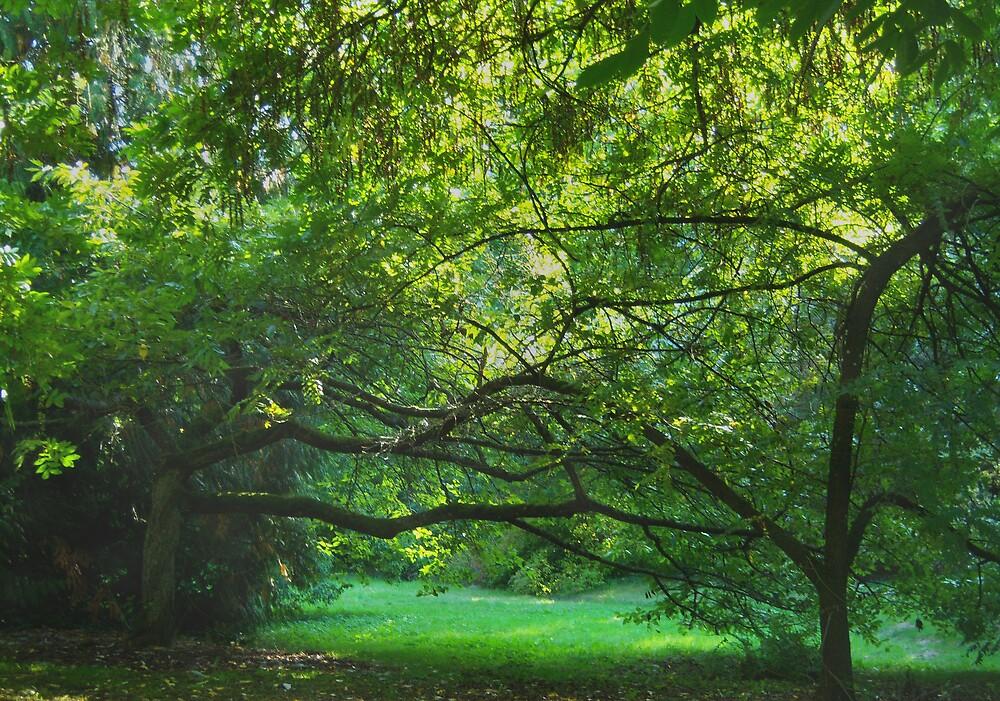 Emerald Balance--Washington Park Arboretum, Seattle Washington by Jess Mo