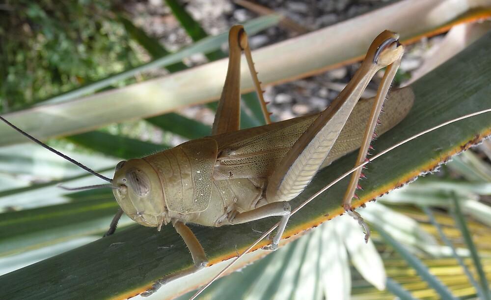 Pesky Grasshopper. by Wilparina