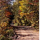 Monticello Pathway by Brenda Dow