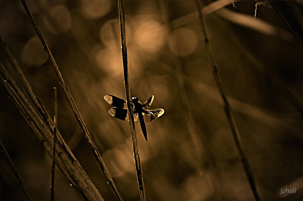 Dragonfly At Dusk by jphall