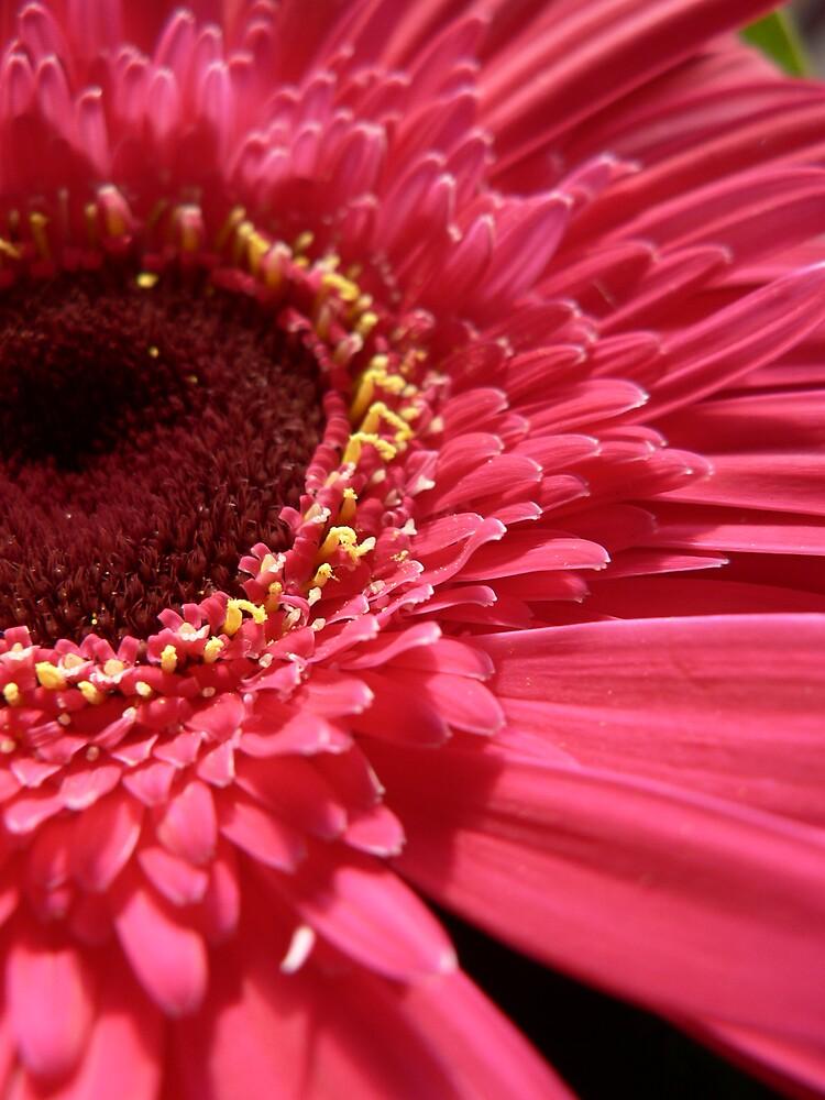 Pink Gerbera 2 by Framed-Photos