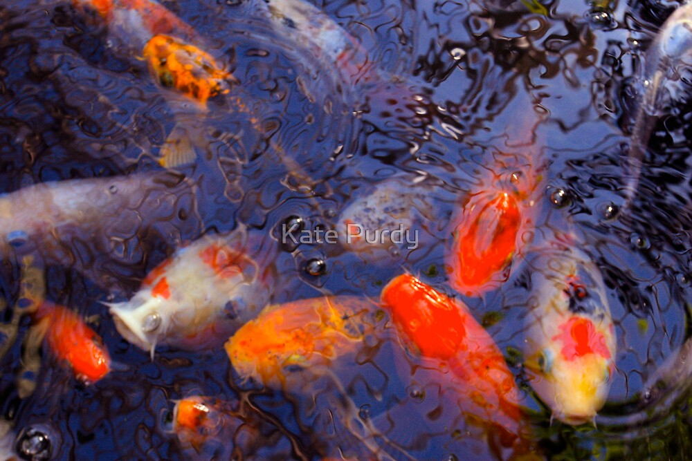 koi 1 by Kate Purdy