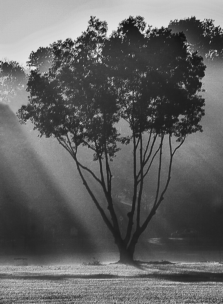Light Of The Morning Sun by Steven  Siow