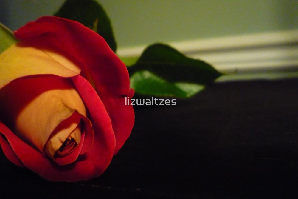 A Single Flower by lizwaltzes