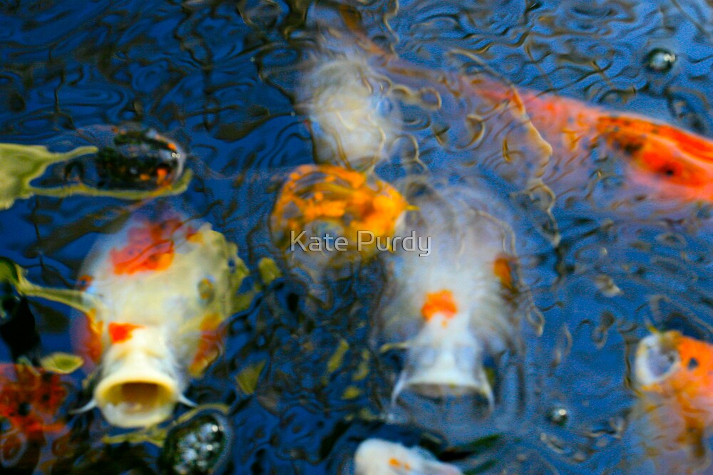 Koi 7 by Kate Purdy