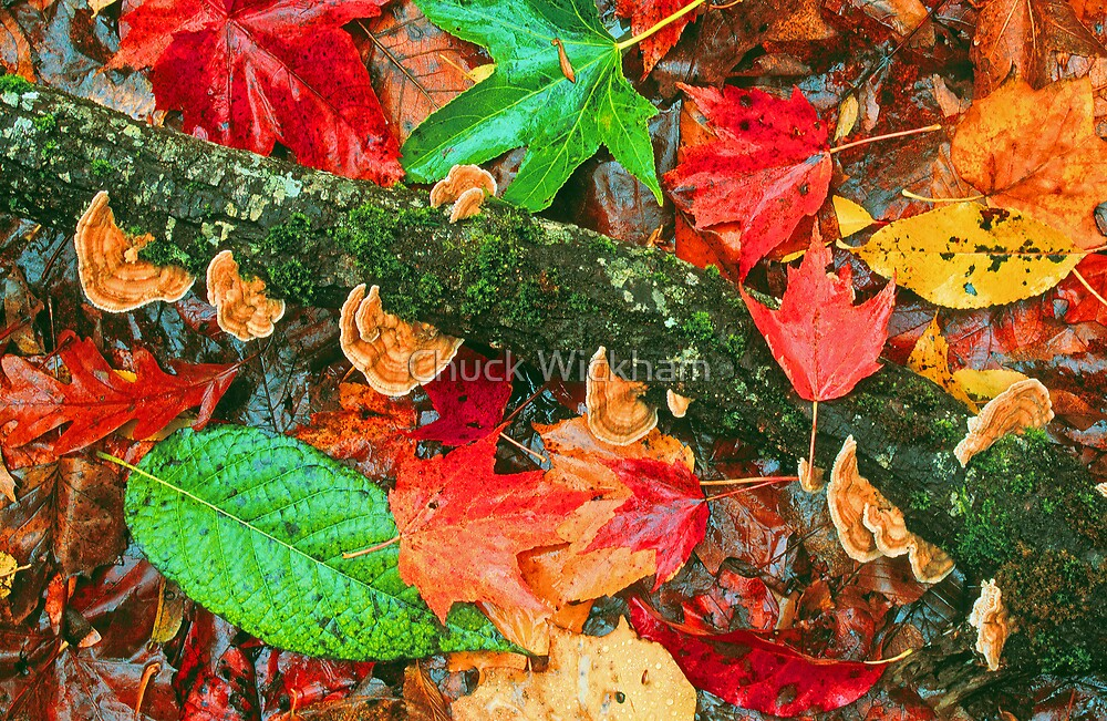 LEAVES AND FUNGI by Chuck Wickham