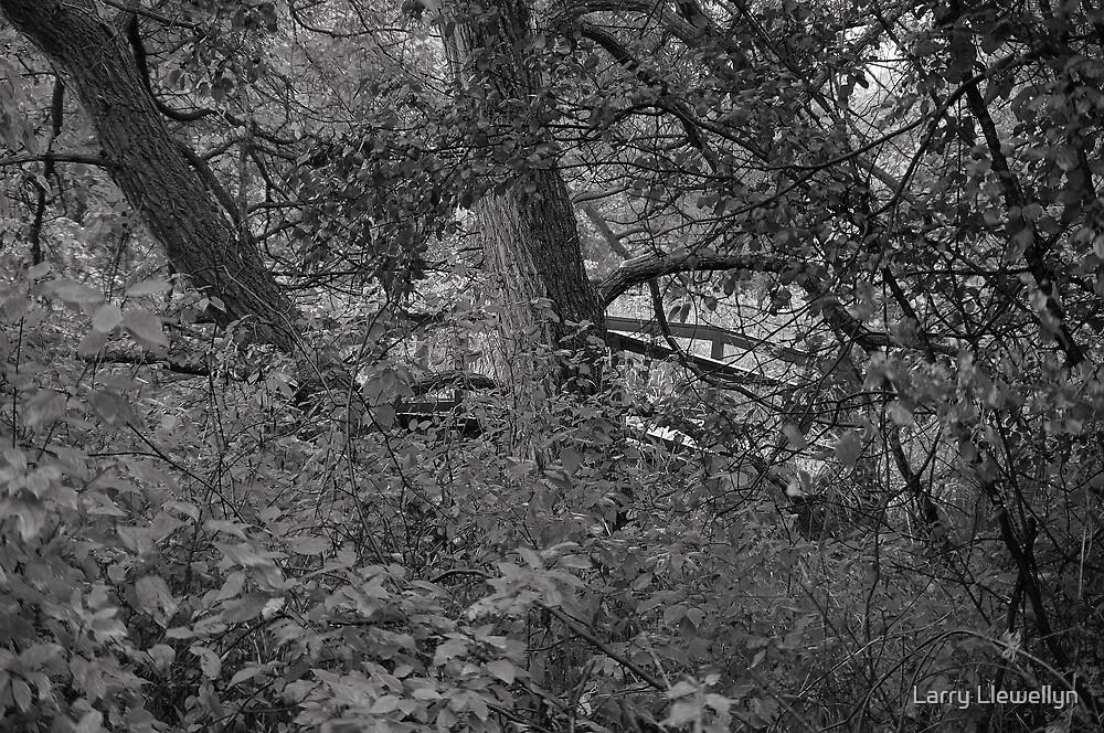 Hidden.. by Larry Llewellyn