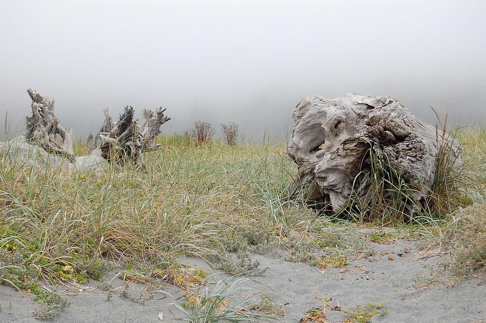 Northern California Driftwood by kelseybrown