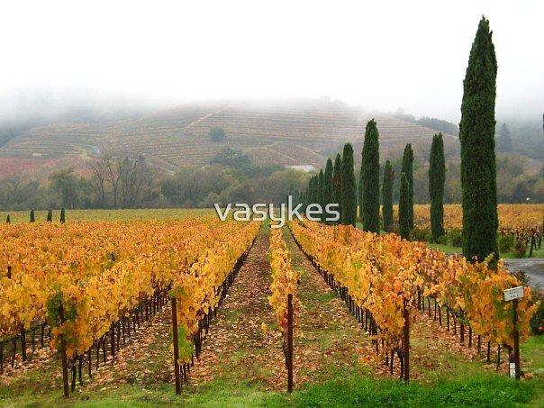 Sonoma Valley in November by vasykes