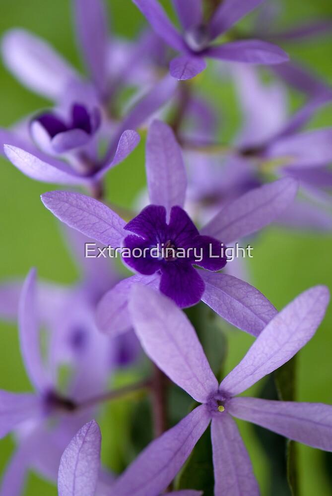 Petrea Vine Flowers by Extraordinary Light