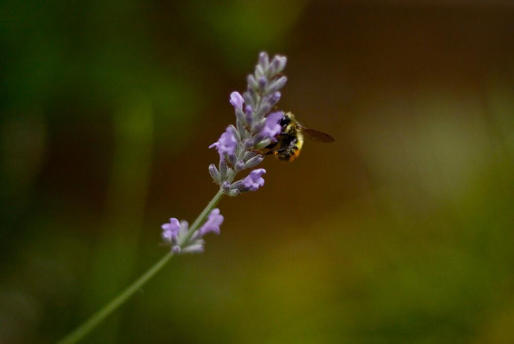 Bee by Mario Alleyne