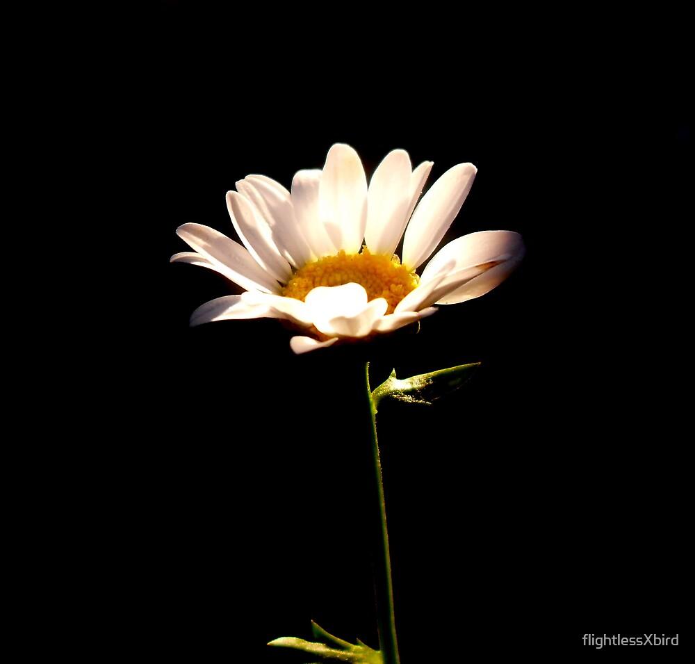 Flower. by flightlessXbird