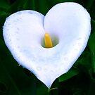 Arum Heart by mooksool