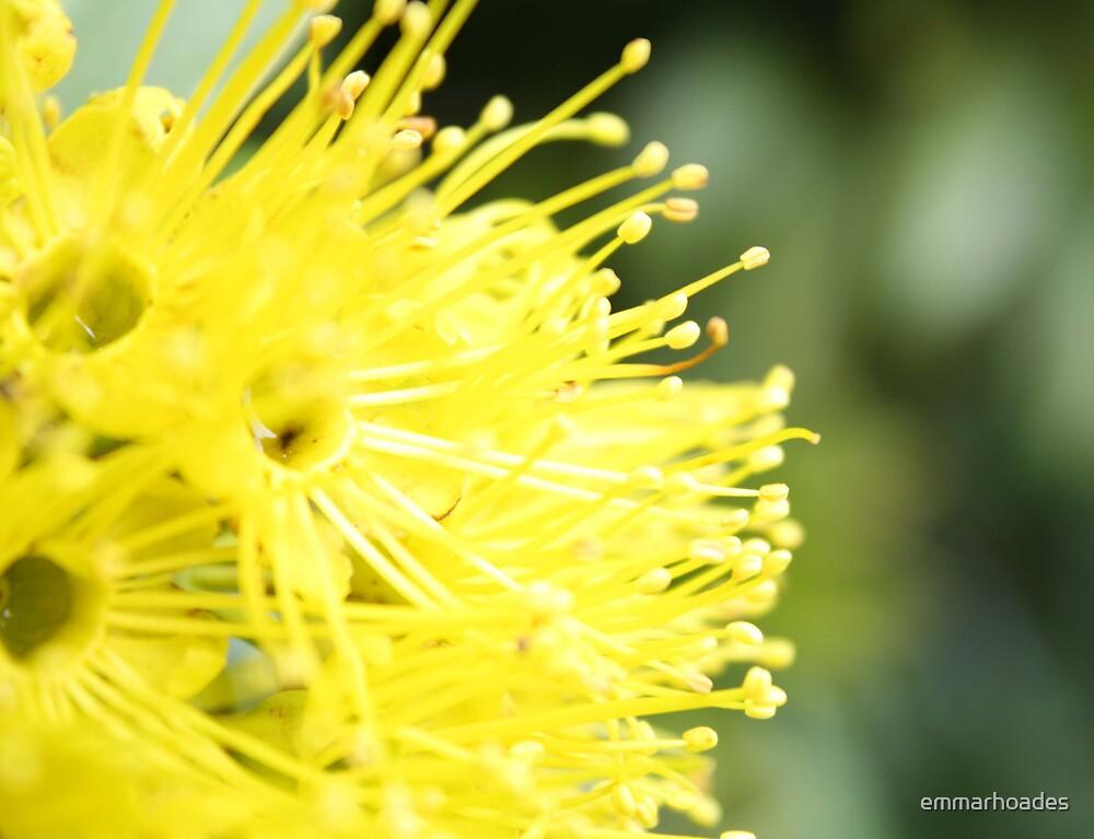 Yellow Flower by emmarhoades