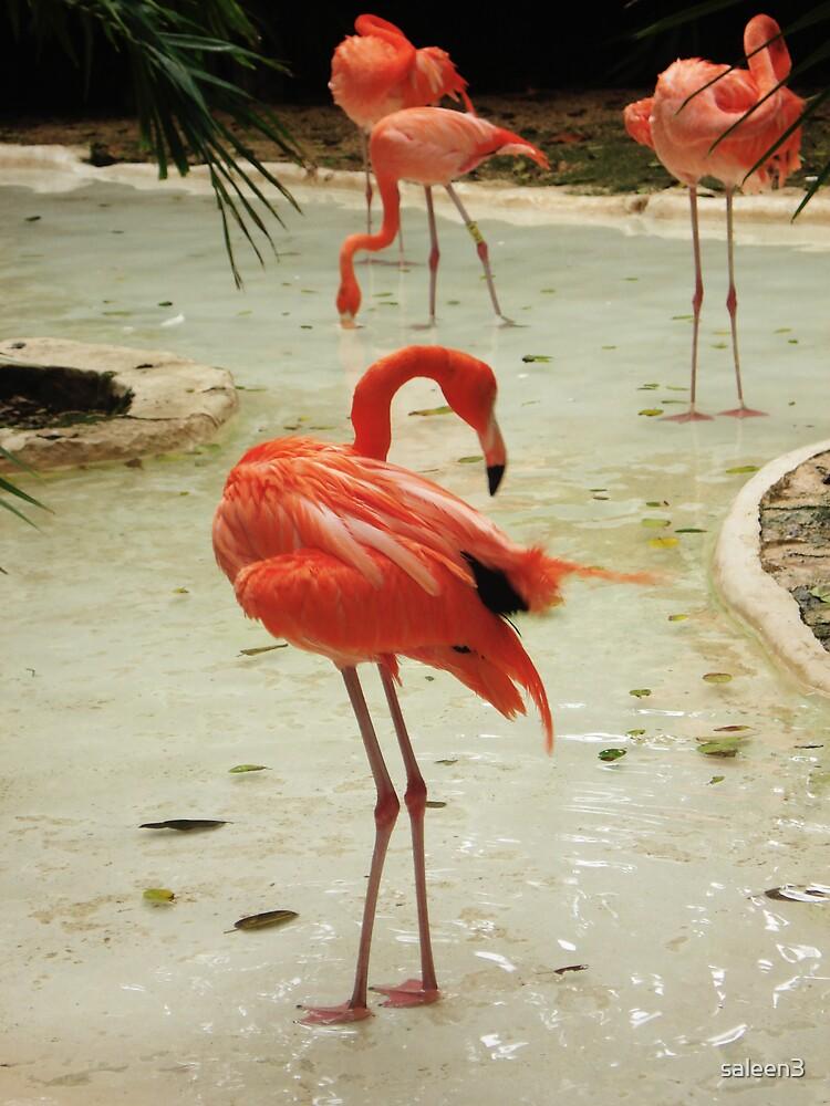 Flamingo by saleen3