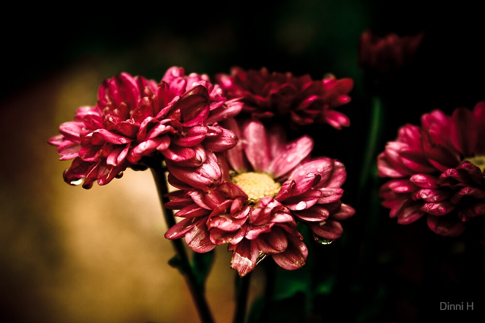 Killer flowers by Dinni H