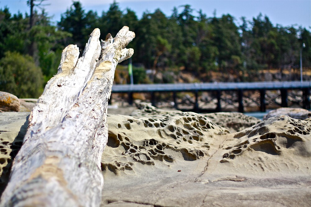 Beach log by Mario Alleyne
