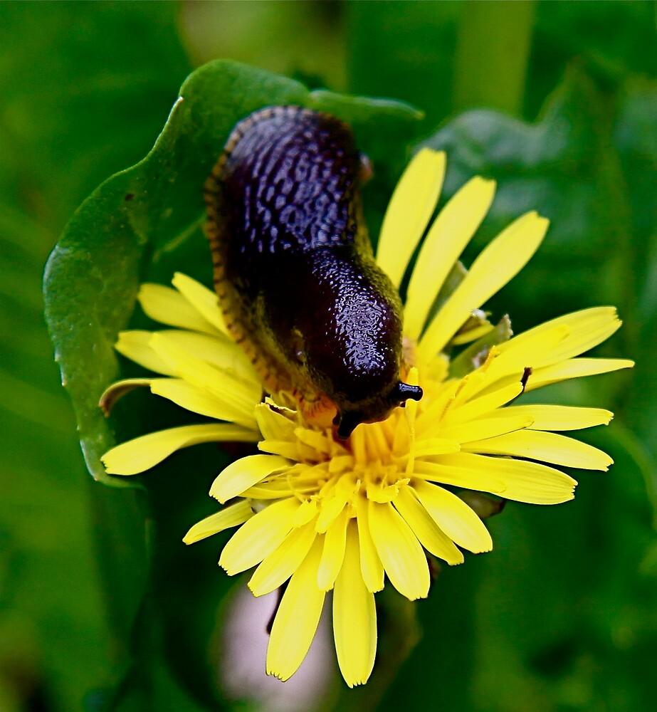 Slug by Mario Alleyne