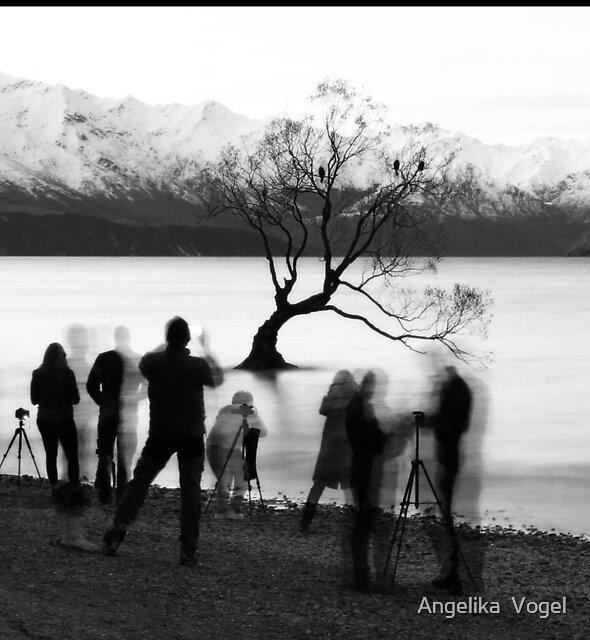A very popular Tree ... by Angelika  Vogel