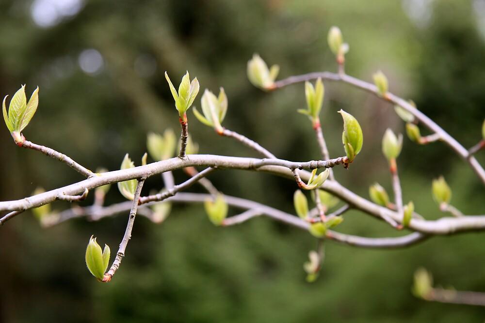 spring by Mario Alleyne