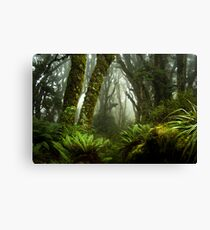 Routeburn magic Canvas Print