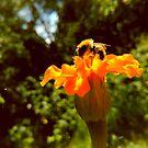 bee of autumn by Julia  Kovtunyak